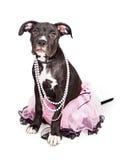 Leuk Puppy die Roze Tutu dragen Royalty-vrije Stock Afbeeldingen