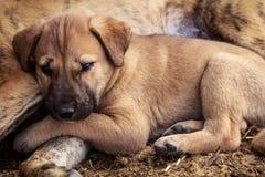 leuk puppy die rust nemen Stock Foto's