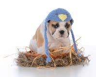 leuk puppy in een vogelsnest royalty-vrije stock afbeeldingen