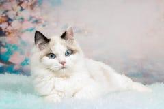 Leuk ragdollkatje op bloemrijke achtergrond Stock Foto's