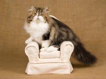 Leuk rood en wit Perzisch katje op bruine stoel Stock Fotografie