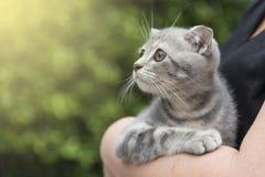 Leuk Schots katje die zonsondergang bekijken stock foto's