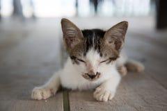 Leuk slaperig katje stock afbeeldingen