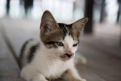 Leuk slaperig katje stock fotografie