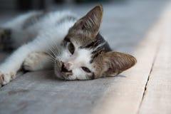 Leuk slaperig katje royalty-vrije stock afbeeldingen