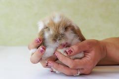 Leuk snoei eared babykonijn Stock Foto