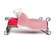 Leuk tabby katje in bed Royalty-vrije Stock Afbeeldingen