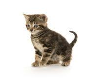 Leuk tabby katje op wit Stock Afbeeldingen