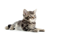 Leuk tabby katje op wit Royalty-vrije Stock Foto's