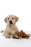 Leuk tan puppy met een gevuld dierlijk stuk speelgoed Royalty-vrije Stock Foto's