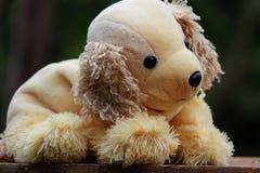 leuk teddybeer bruin licht royalty-vrije stock foto