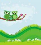 Leuk uilenpaar met babyuil Stock Foto