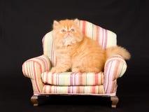Leuk vrij Perzisch katje op stoel Royalty-vrije Stock Foto
