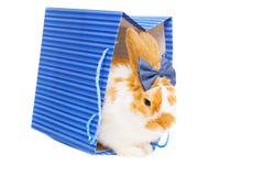 Leuk vrouwelijk konijntje met boog als gift op achtergrond Stock Foto's