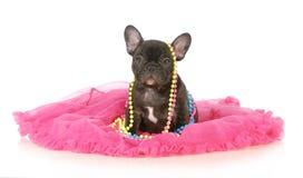 Leuk vrouwelijk puppy royalty-vrije stock afbeeldingen