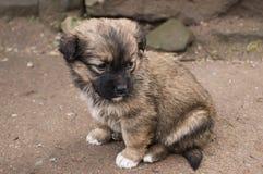 Leuk weinig alleen puppy Stock Afbeelding