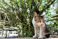 Leuk weinig babykatten/kitty/katje Stock Fotografie