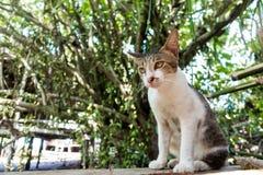 Leuk weinig babykatten/kitty/katje Royalty-vrije Stock Afbeeldingen