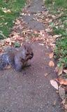 Leuk weinig eekhoorn die haar maaltijd kauwen royalty-vrije stock fotografie