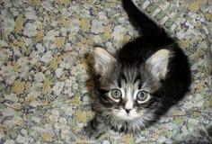 Leuk weinig gestreept grijs pluizig aanbiddelijk katje royalty-vrije stock afbeelding