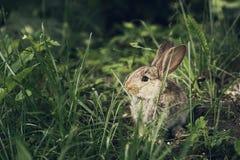 Leuk weinig hazen of konijn het verbergen in het gras stock foto's