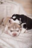 Leuk weinig het pasgeboren schor liggen samen en het slapen Stock Fotografie