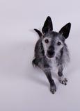 Leuk weinig hond royalty-vrije stock foto