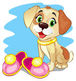 Leuk weinig hond Royalty-vrije Stock Afbeelding