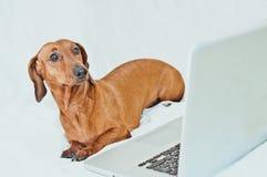 Leuk weinig hond met computer op wit Royalty-vrije Stock Foto