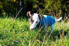 Leuk weinig hond met genoegen die aan houten stok in gras knagen royalty-vrije stock foto's
