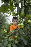 Leuk weinig jongen door een Apple-boom met appelen Stock Fotografie