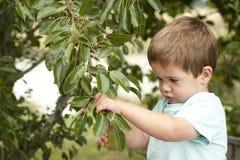 Leuk weinig jongen het plukken fruit van boom Stock Foto