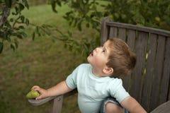 Leuk weinig jongen het plukken fruit van boom Stock Foto's