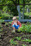 Leuk weinig jongen het tuinieren stock afbeelding