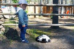 Leuk weinig jongen met zwart-wit katje in openlucht royalty-vrije stock afbeeldingen