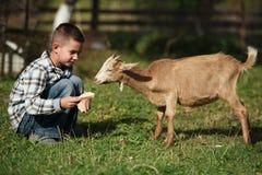 Leuk weinig jongens voedende geit Stock Foto's