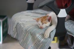 Leuk weinig kat Royalty-vrije Stock Fotografie