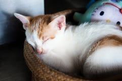 Leuk weinig kat Stock Afbeeldingen