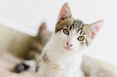 Leuk weinig kat Royalty-vrije Stock Afbeeldingen