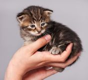 Leuk weinig katje stock afbeelding