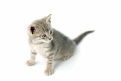Leuk weinig katje stock foto's