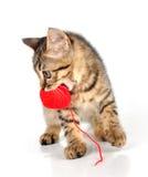 Leuk weinig katje die een wolbal dragen Royalty-vrije Stock Fotografie