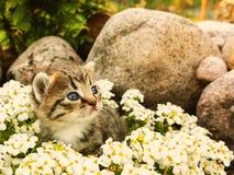 Leuk weinig katjeszitting onder de witte bloemen en de stenen stock foto's