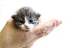 leuk weinig katjeszitting op de palm Geïsoleerdj op witte achtergrond Stock Foto's
