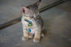 Leuk Weinig Kitten Outdoors Stock Foto