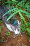 Leuk Weinig Kitten Outdoors Stock Foto's