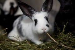 Leuk weinig konijn in de kooi stock foto's