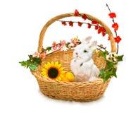 Leuk weinig konijn in mand Royalty-vrije Stock Foto's