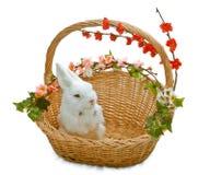 Leuk weinig konijn in mand Royalty-vrije Stock Fotografie