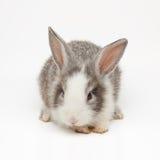Leuk weinig konijntje Stock Foto's
